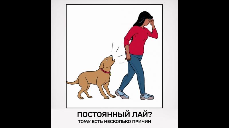 Что делать, если у соседей лает собака: инструкция