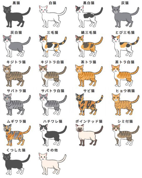 Окрасы кошек (цвет и рисунки на шерсти кощачьих)