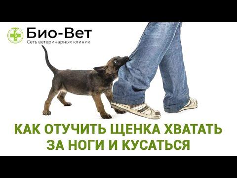 Как отучить щенка кусаться за руки и ноги хозяина