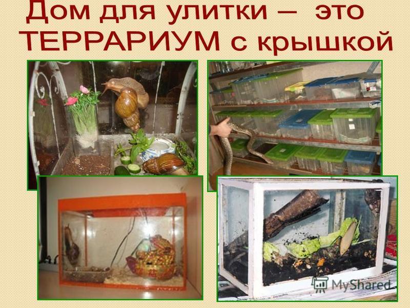 ᐉ как обустроить террариум для ахатины, поилка для улиток - zoomanji.ru