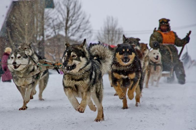 Все русские охотничьи породы собак фото