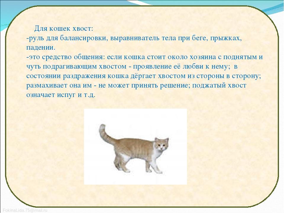 Кожные болезни кошек симптомы и лечение фото