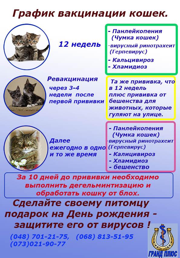 Прививки для кошек и котят: какие делают, когда, в каком возрасте. вакцинация кошек. первая прививка. график (таблица) - питомник elite british