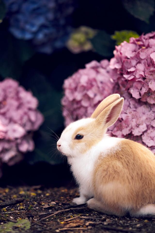 ᐉ породы и виды декоративных кроликов - zooon.ru