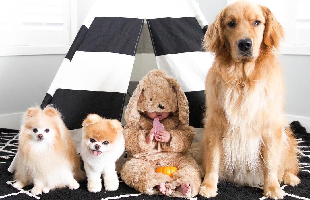 Собаки для детей: воспитай себе друга!