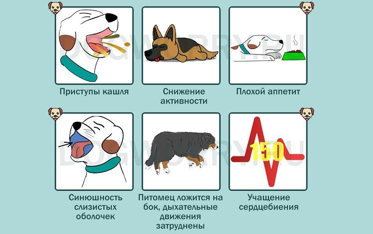 Бронхиальная астма у кошек — лечение органов дыхания в ветеринарной клинике «амикус вет»