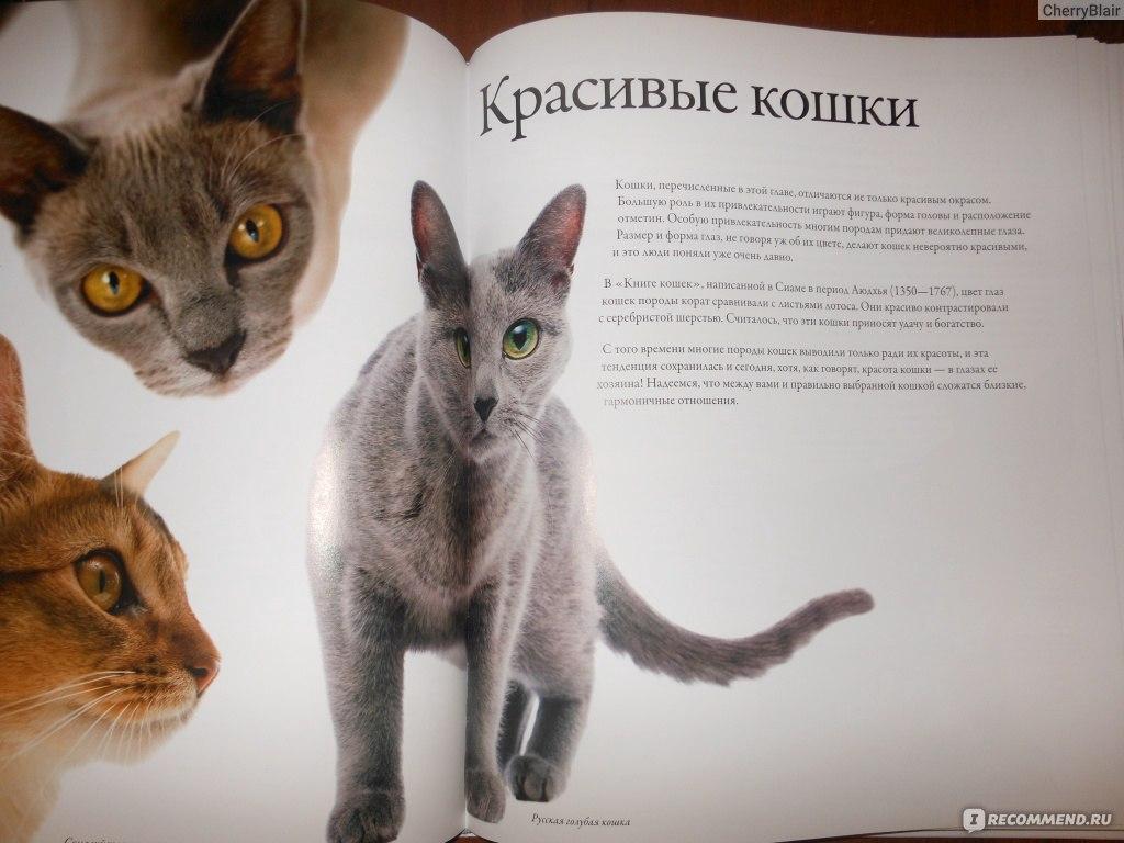 Кот или кошка: кого лучше завести в квартире?