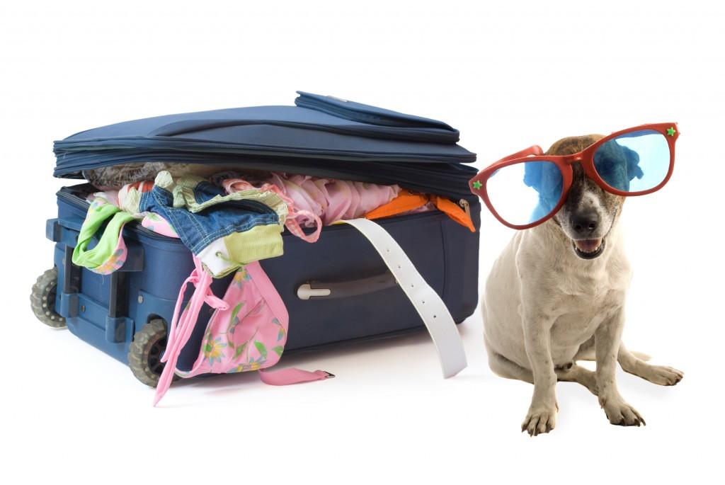Где оставить собаку на время отпуска: все возможные и варианты