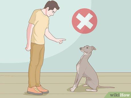 Можно ли наказывать собаку за писание дома изоляцией