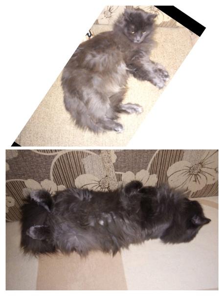 Почему у кошки сильно лезет шерсть летом