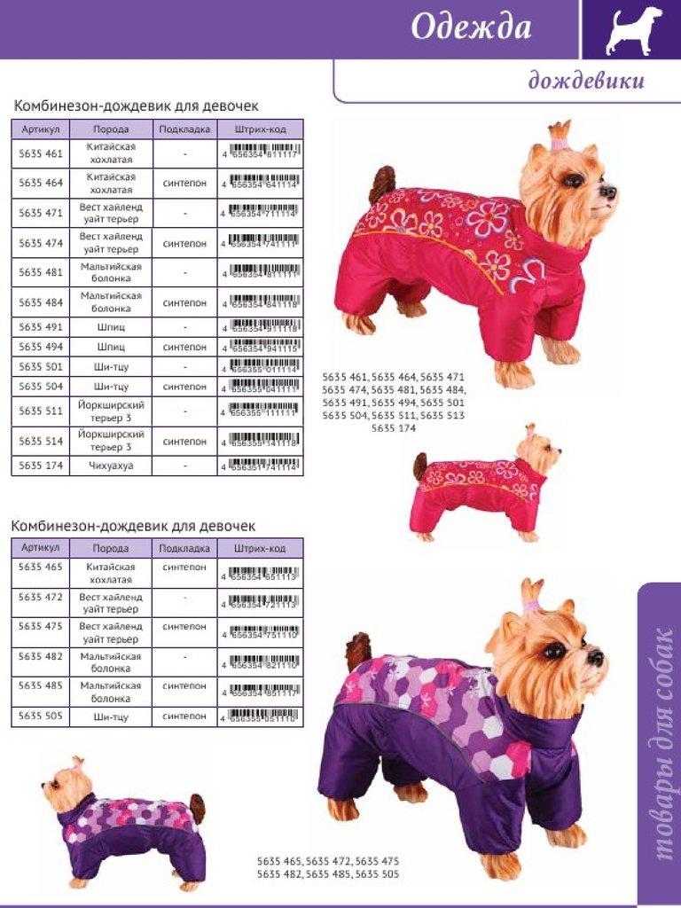 Как выбрать щенка чихуахуа: стандарт, советы, признаки