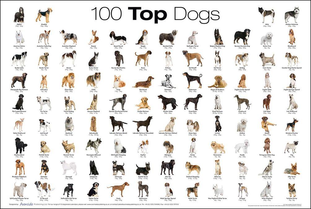 Как узнать какая порода у собаки тест щенка