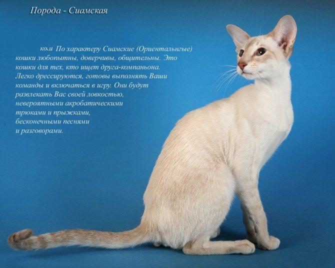 Саванна – фото кошки, цена, особенности породы, характер, отзывы владельцев