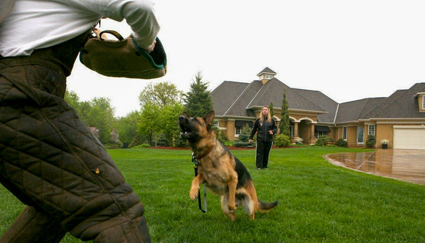 Сторожевые породы собак: каких охранных псов лучше завести для частного и загородного дома, лучшие варианты с фотографиями, описанием и названиями. правила содержания