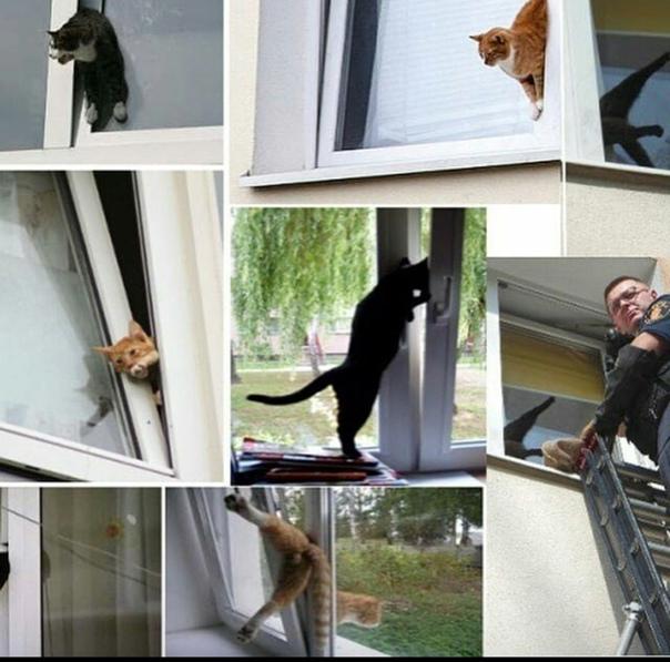 Как отвадить чужую кошку от дома когда дома есть своя кошка