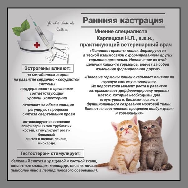 Рвота у кошки – как понять причину и оказать помощь животному.