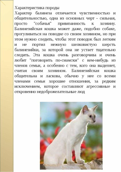 Без кота и жизнь не та: топ-18 лучших пород кошек