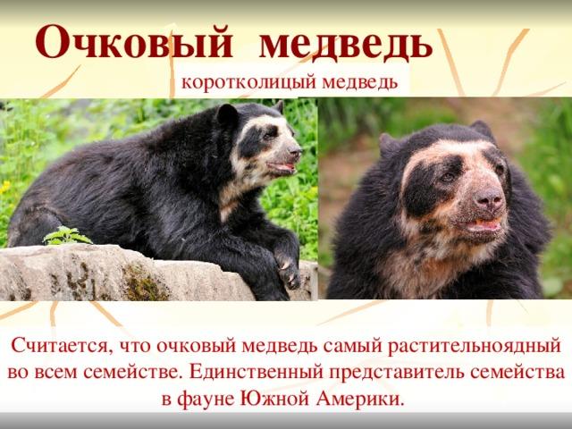 Медведь гризли: описание, где обитает, чем питается
