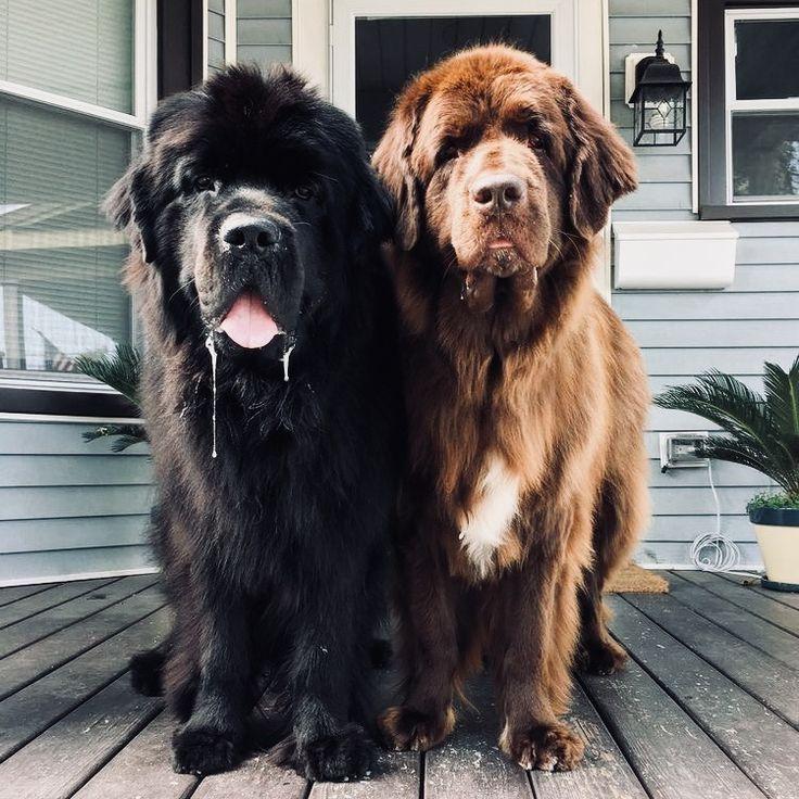 Самые крупные породы собак с названиями и фото