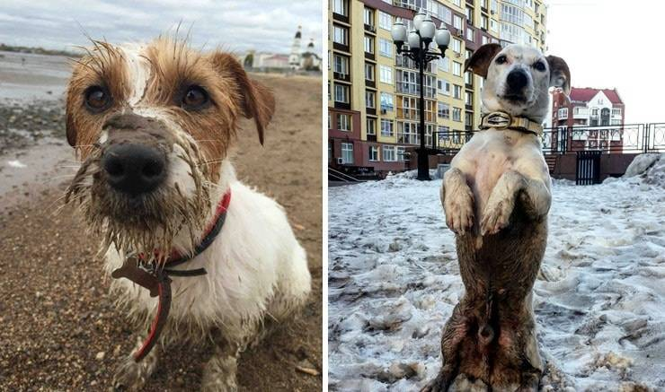 ᐉ почему собаки уходят из дома перед смертью? - zoomanji.ru