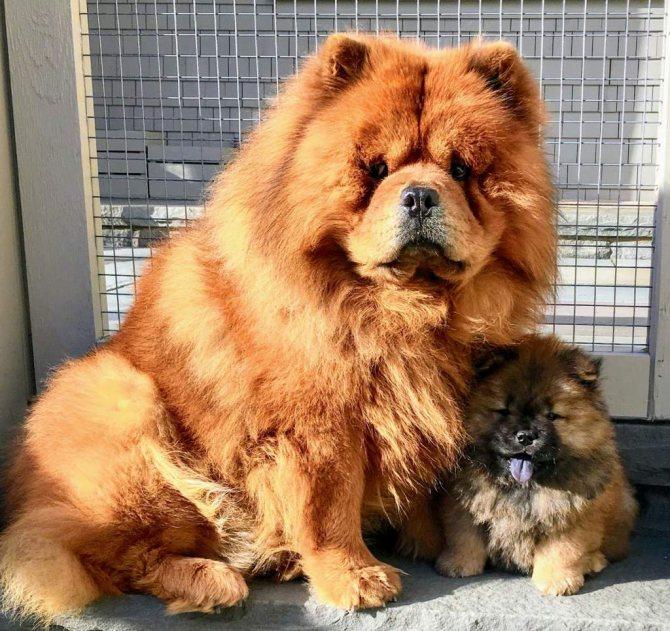 Симптомы болезней собак