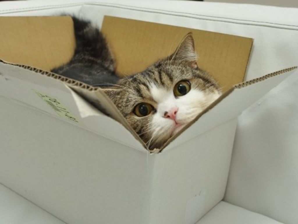 Почему кошки любят коробки и пакеты?