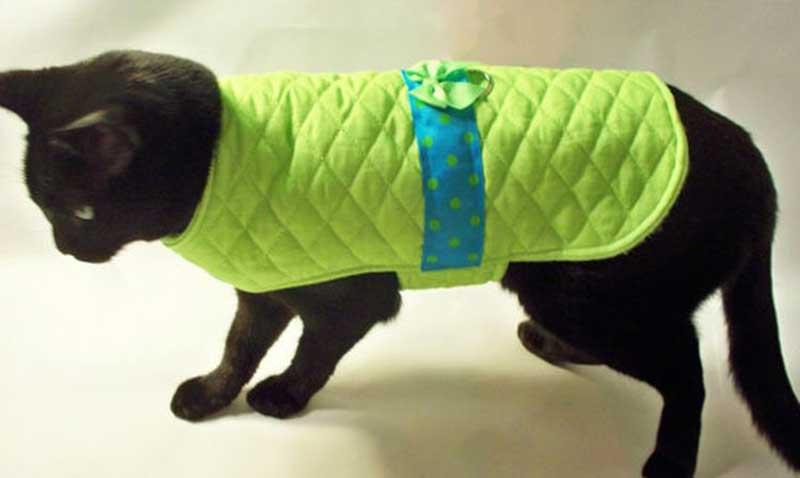 Попона для кошки: примеры как завязать и одеть на животное