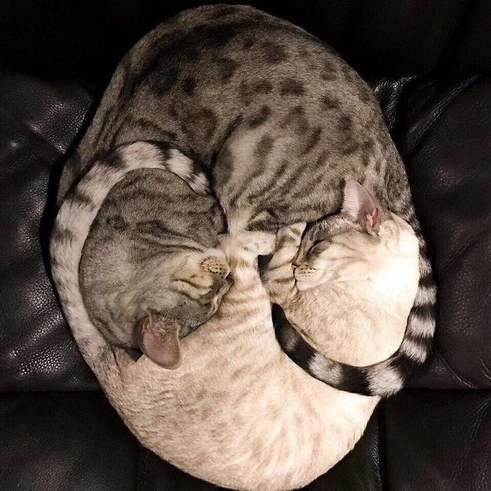 ᐉ как место сна кошки по приметам влияет на жизнь хозяина - zoovet24.ru