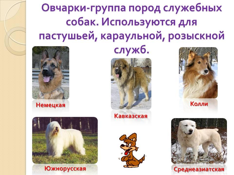 Русские породы собак с фотографиями и названиями