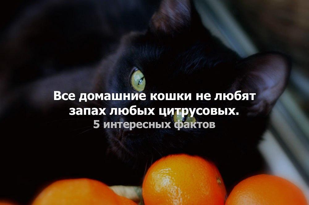 Какой запах не любят кошки: подбираем отпугивающие запахи