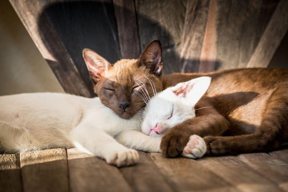 Как подружить кошку с собакой в одном доме или квартире: советы для владельцев по знакомству и обустройству быта домашних питомцев