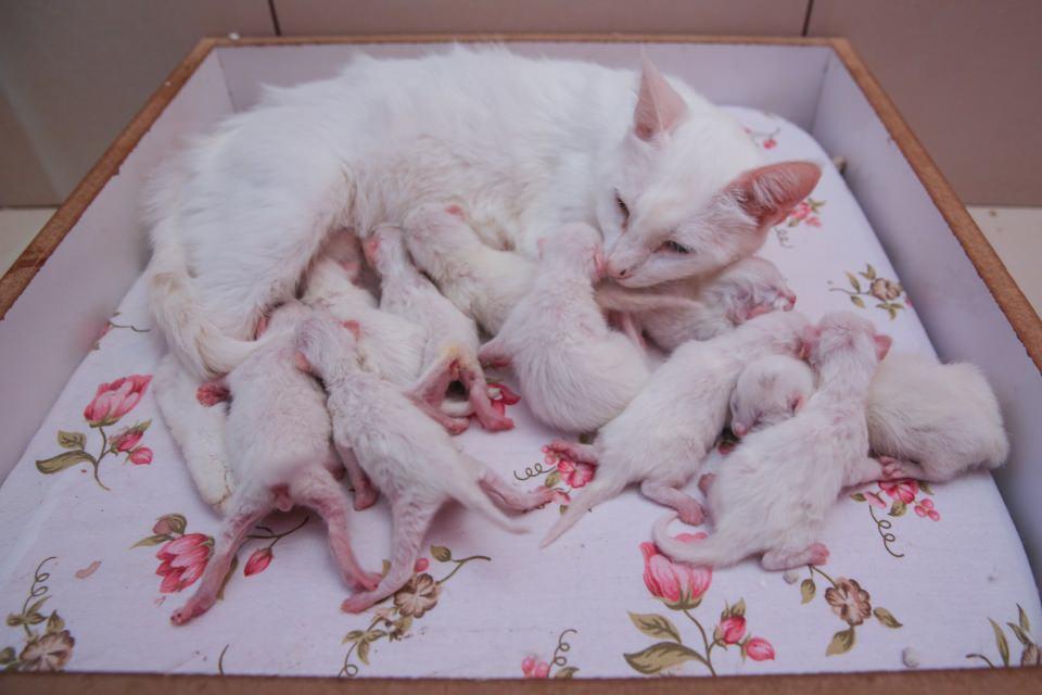 Почему кошка родила только 1 котенка?