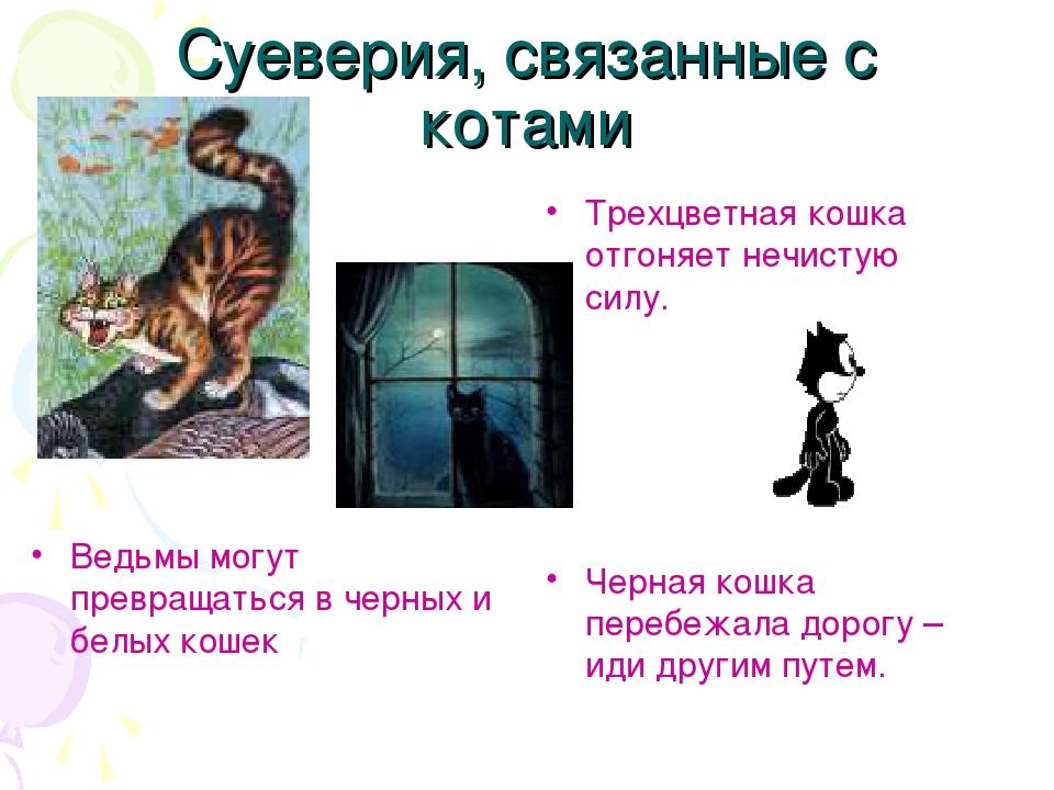 Черепаховая кошка в доме: приметы о животных трехцветного окраса, суеверия и поверья