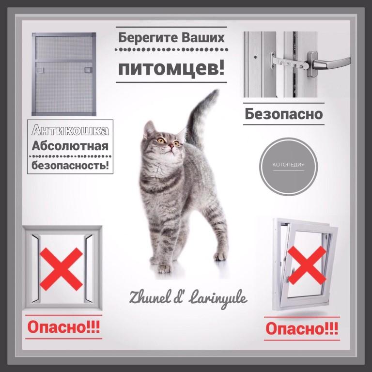 Если в доме живут две кошки приметы. «кошачьи» приметы или зачем нужны кошки в доме