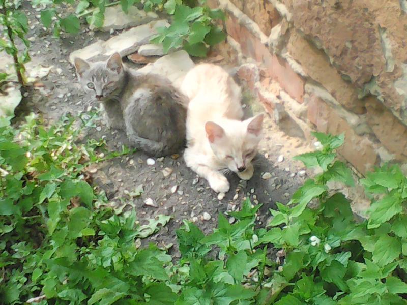 Как приманить котенка на улице и быстро поймать его в ловушку, если боится