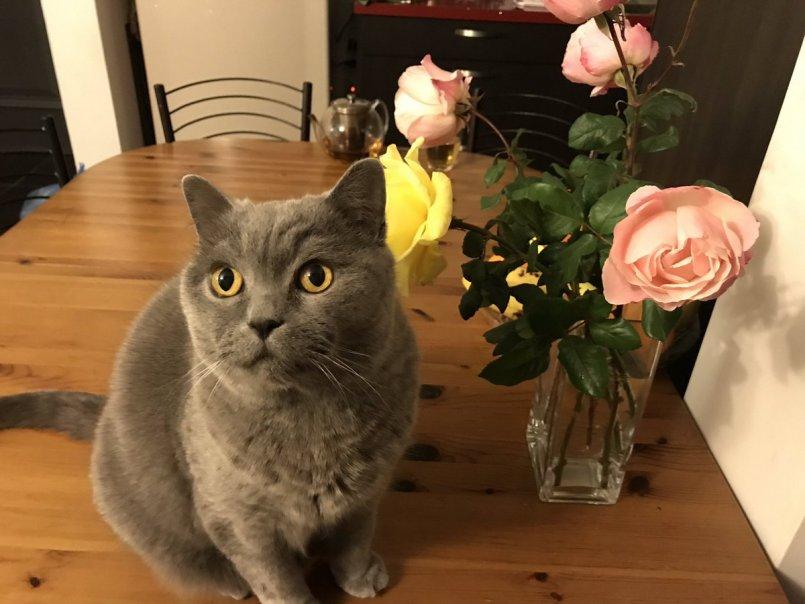 ᐉ как свести кота с кошкой первый раз – как заставить кошек спариваться? - zoomanji.ru