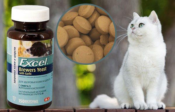 Какие продукты нельзя давать кошке ни в коем случае!
