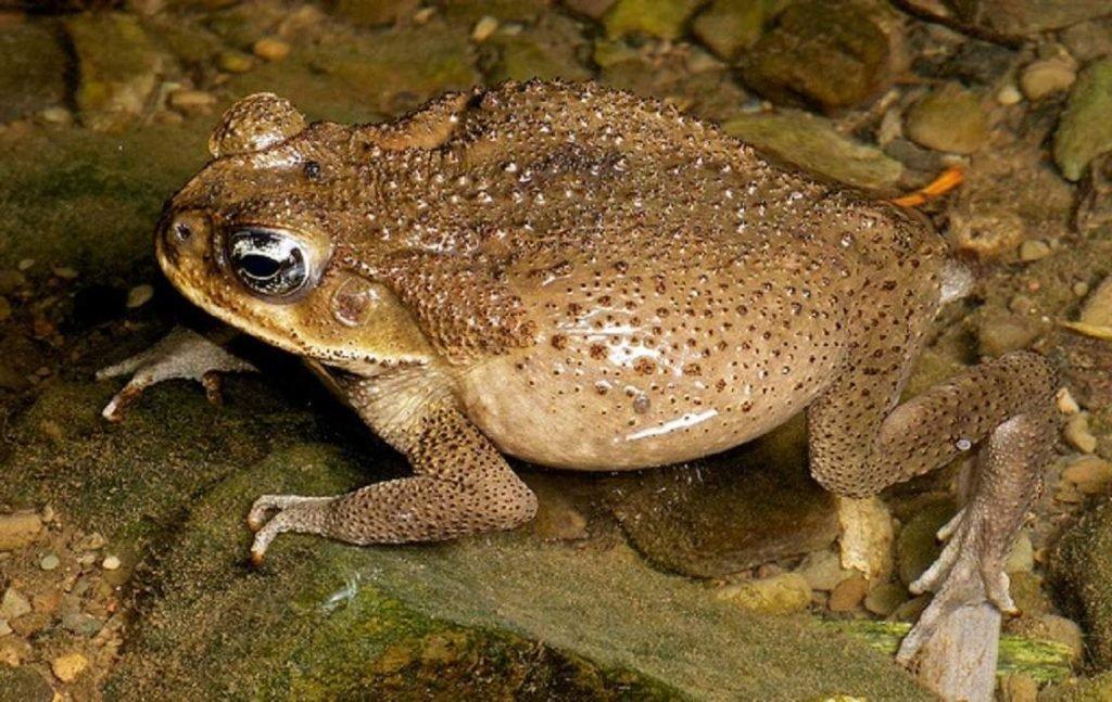 Жабы: фото, описание. отличие жабы от лягушки.
