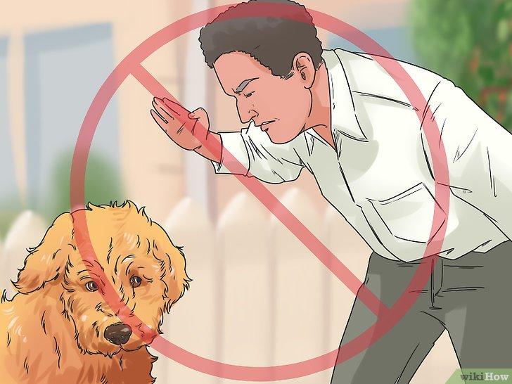 Наказание собаки за непослушание: можно ли голодом, как ругать за укус хозяина