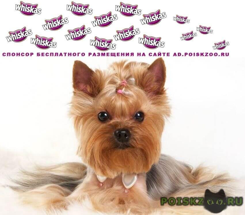 Варианты кличек для собак-мальчиков маленьких пород