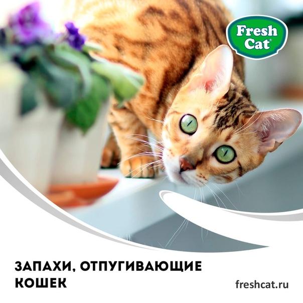 Эти 12 запахов не выносит любая кошка. полезная информация для владельцев
