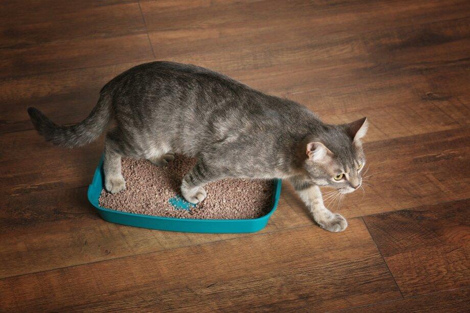 Почему кошка перестала ходить в лоток «по-большому»? - всё о кошках и котах
