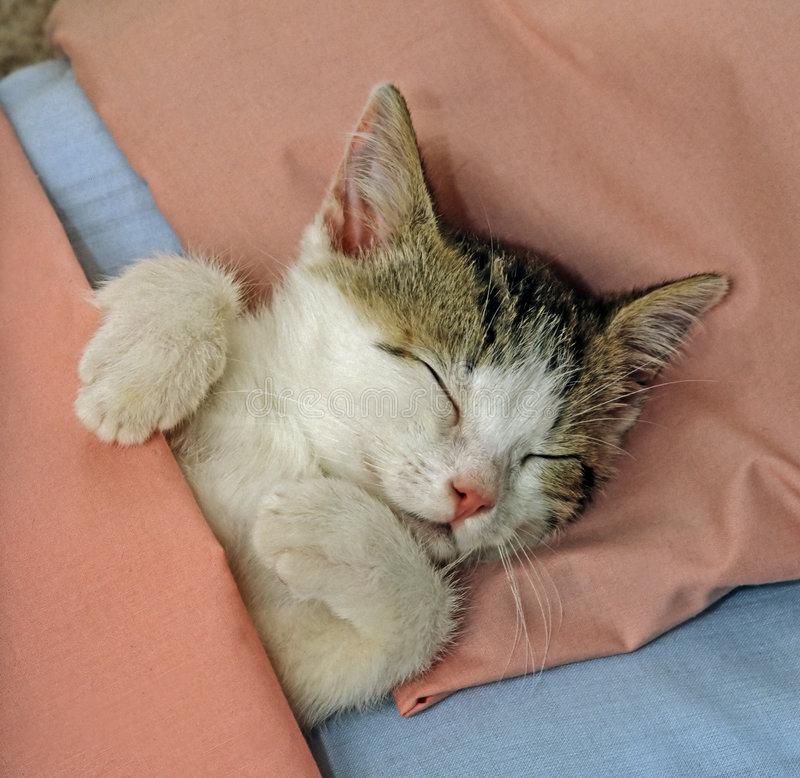 Почему кошка везде следует за хозяином?