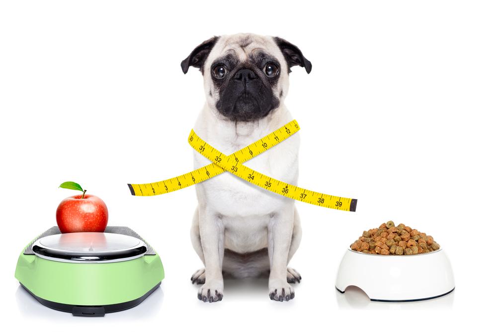 Как помочь собаке похудеть и поддерживать идеальный вес?