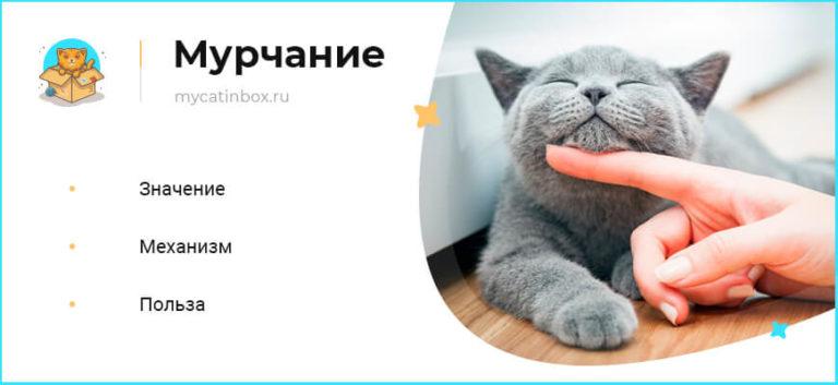 Почему кошки мурлыкают? что это значит?