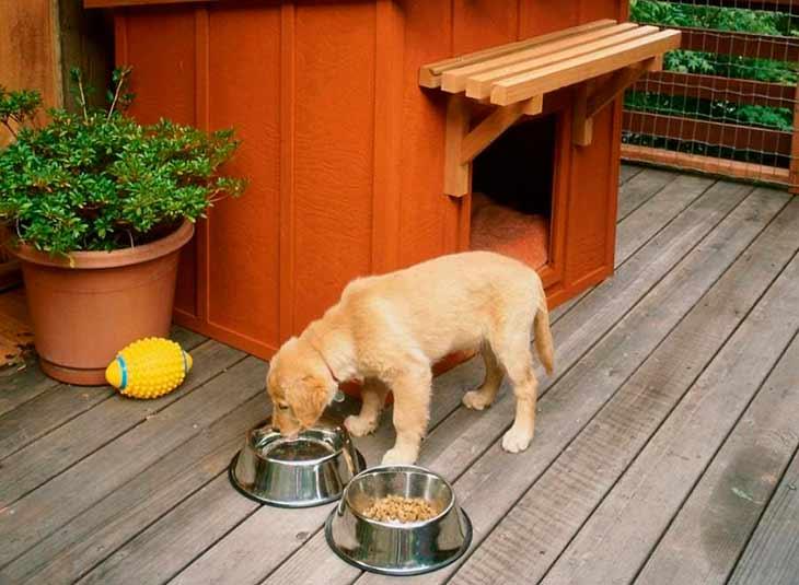 Как приучить собаку к туалету: топ-10 полезных советов