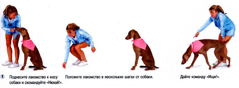 """Учим собаку команде """"лежать"""": техники от кинолога, видеоуроки"""
