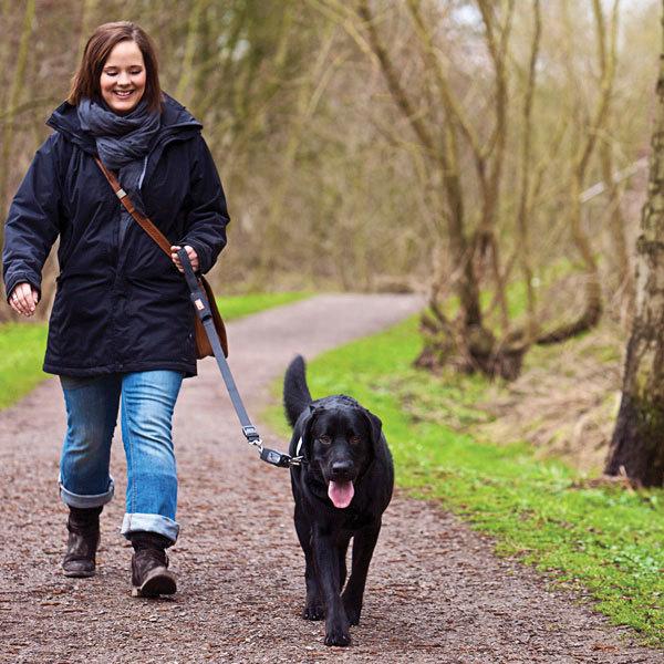 Когда, как и сколько нужно гулять со щенком | petguru