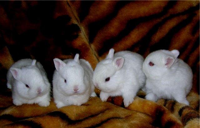 Выбираем имя питомцу – как назвать кролика девочку и мальчика