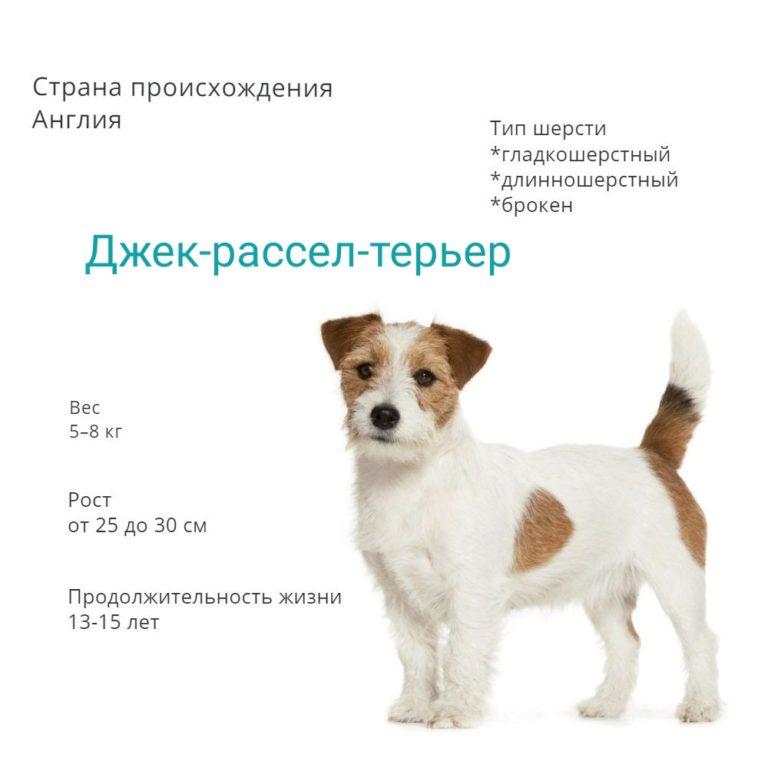 Самые дешевые породы собак